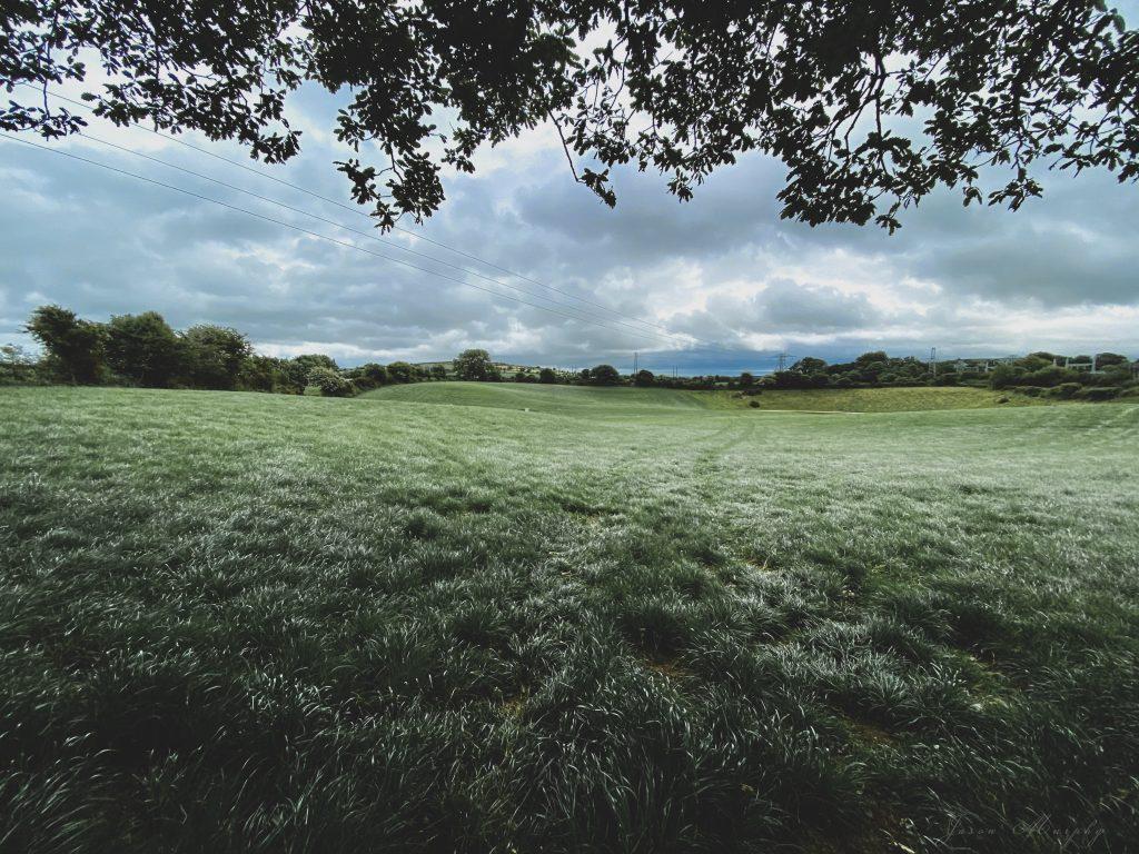 An image of Irish grasslands